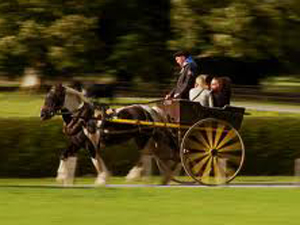 horse_and_jaunting_car_ireland.jpg